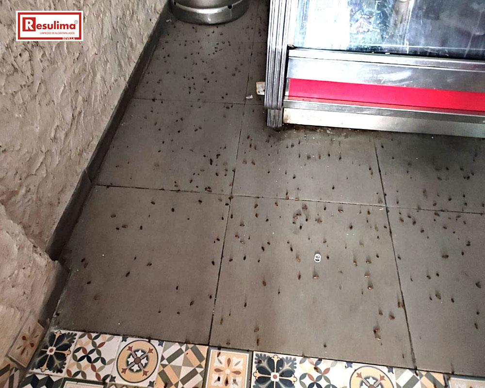 Desinsectación y tratamiento de choque contra blattella germanica en Sevilla