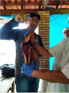 Curso de Processamento Artesanal de Carne de Peixe foi ministrado no Boqueirão Sul
