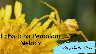 Laba-laba pemakan nektar