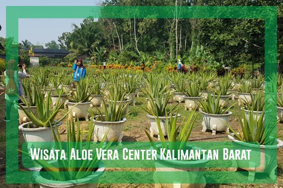 Wisata Aloe Vera Center Kalimantan Barat