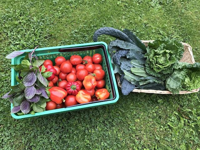 Tomaten und Kohl die  Ernte des Tages (c) by Joachim Wenk