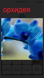 Ветка цветов орхидеи синего цвета