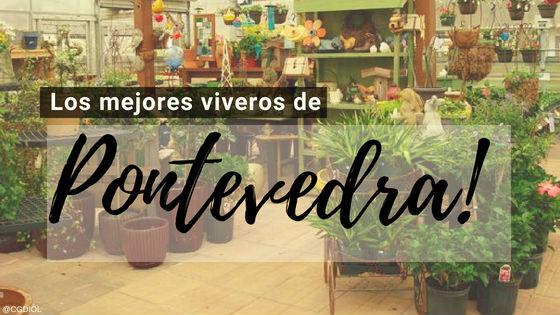 Comprar plantas online en Pontevedra