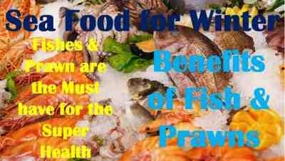 Sea Food for Winter   Fishes & Prawn are the Must have for the Super Health   Benefits of Fish & Prawns