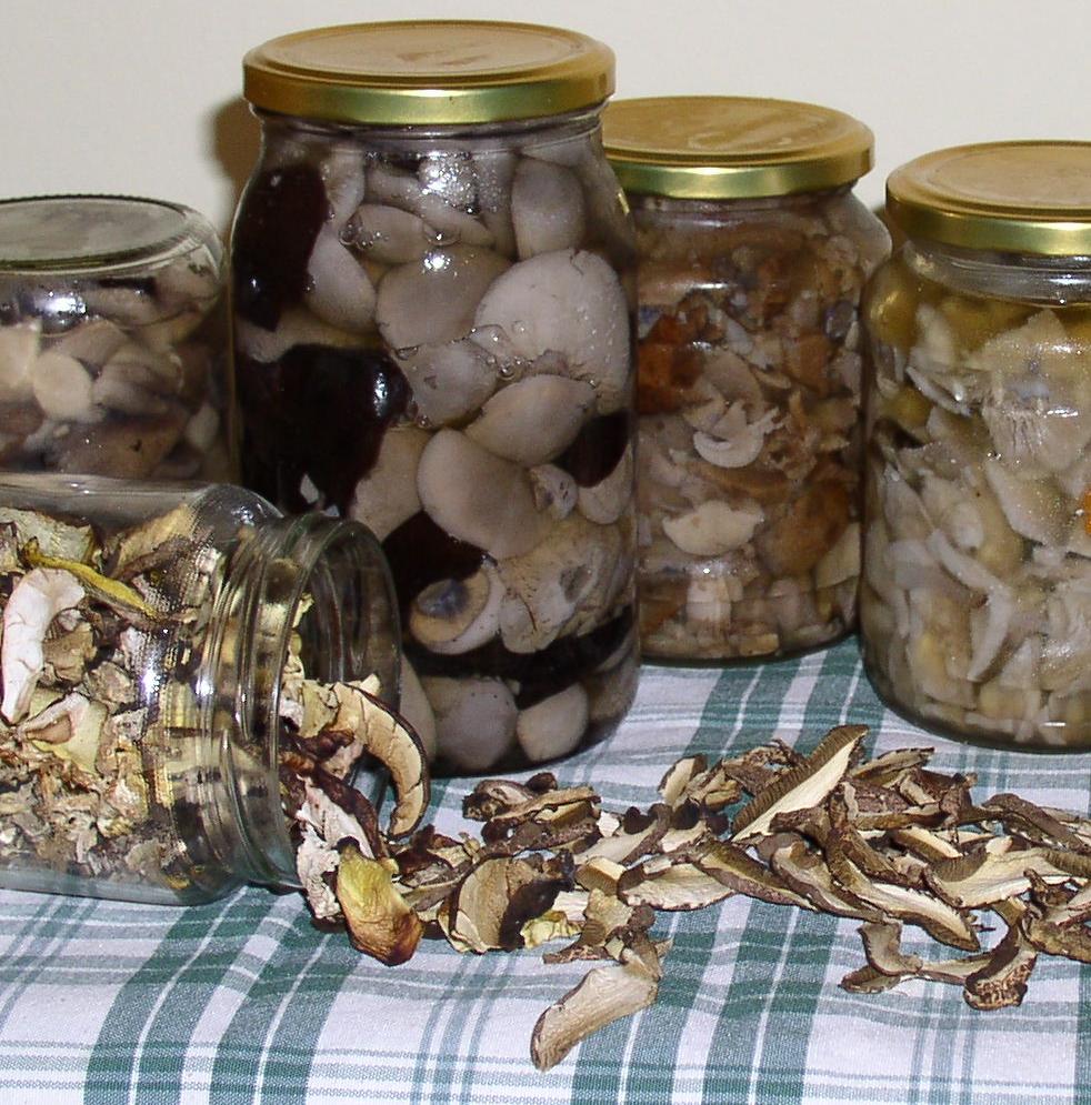 gombák sós lében