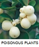 67 POISONOUS PLANTS