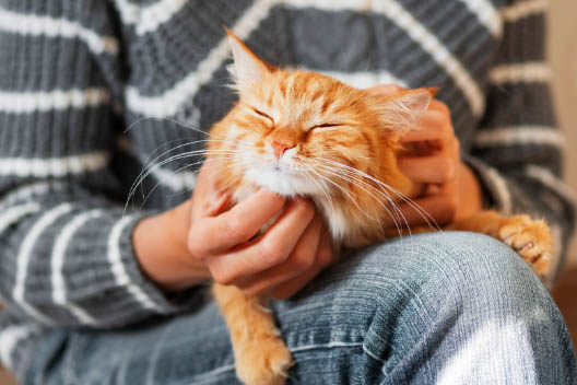Waleriana dla kota