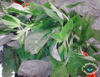 manfaat sayur dan buah berdasarkan warnanya