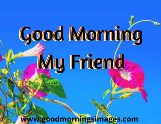 Good Morning Wish For Friend