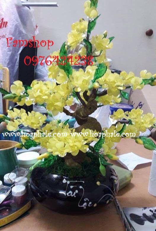 Goc bonsai cay hoa mai o Tran Thai Tong