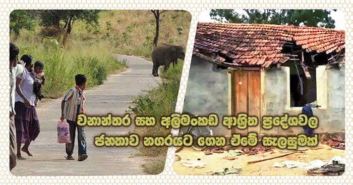 https://www.gossiplanka.com/2020/09/plan-to-villages-move.html