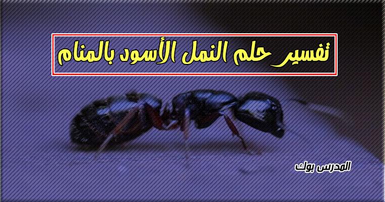 تفسير حلم النمل الأسود في المنام لابن سيرين