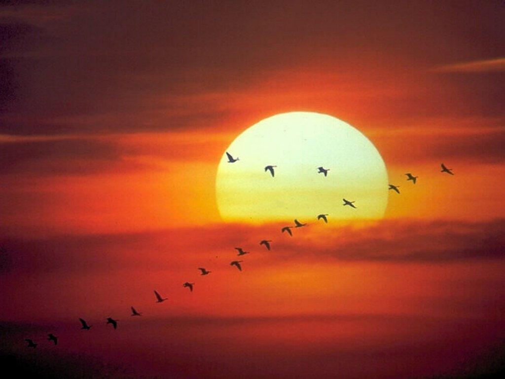 صور لمغيب الشمس التقطت من اماكن عديدة url.jpg