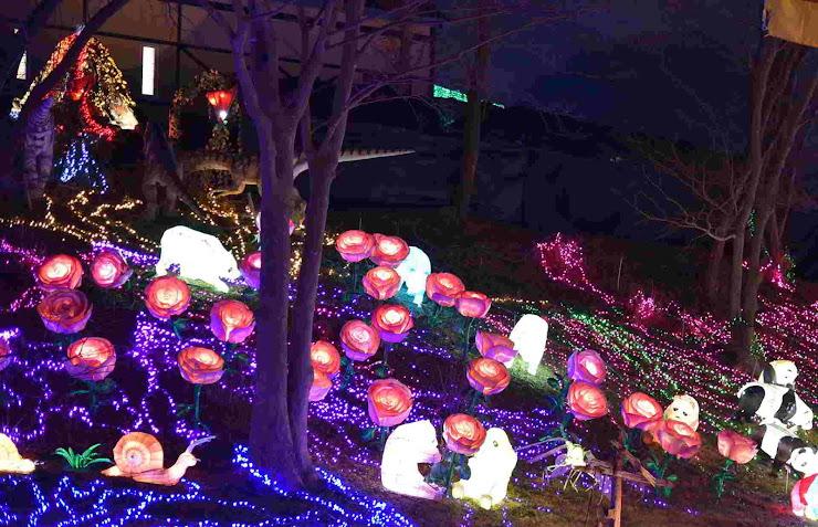 東京ドイツ村イルミネーション6