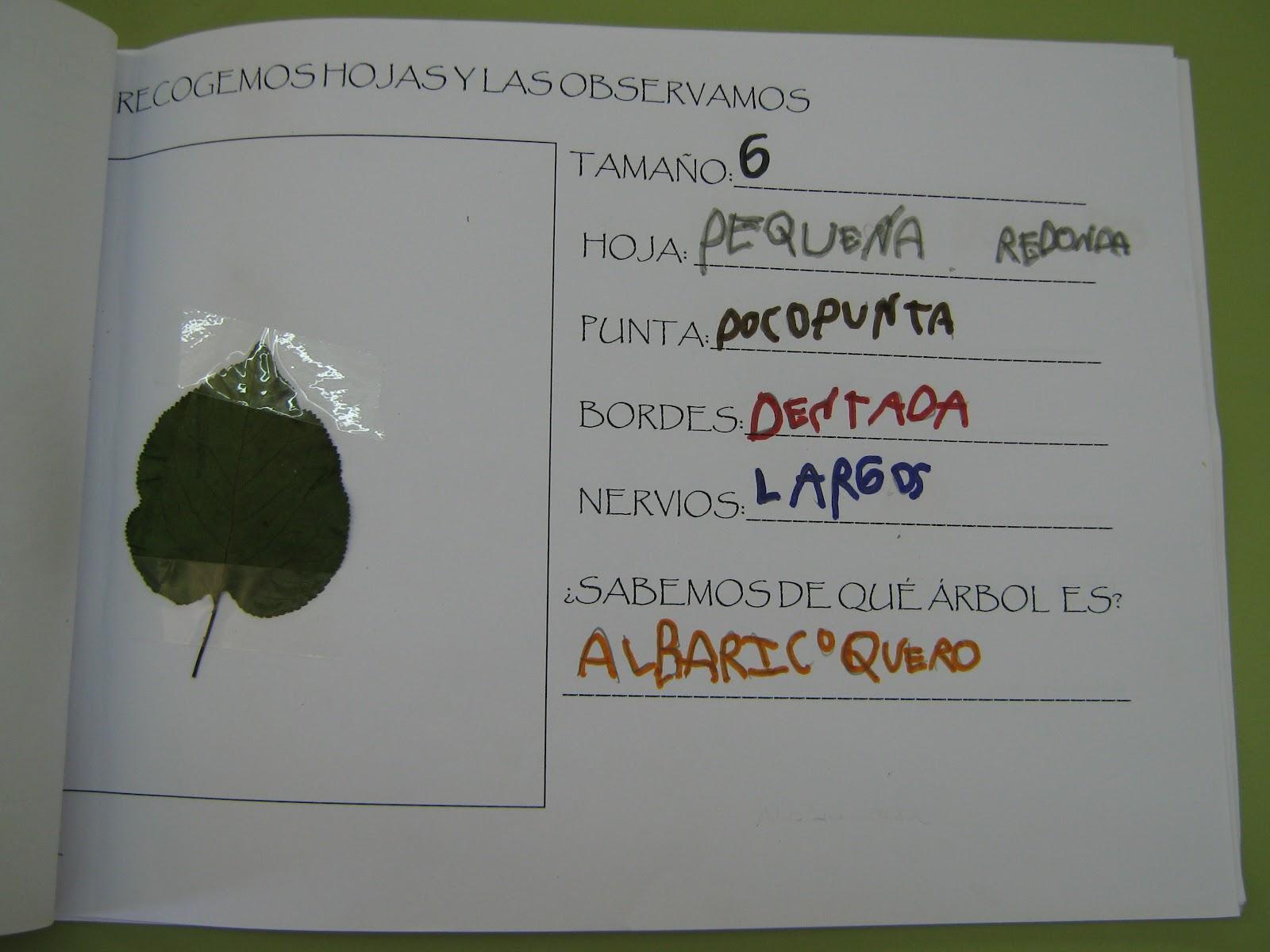 Los peques del picasso nuestros trabajos rboles for Caracteristicas de los arboles de hoja perenne