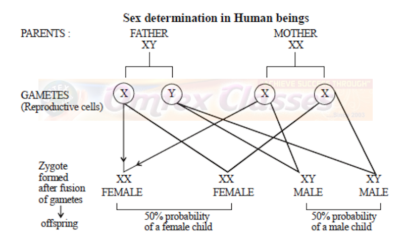 Chapter 3: Inheritance and Variation Balbharati Solutions for Biology 12th Standard HSC Maharashtra State Board
