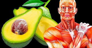 Avocado A Day To Lose Weight