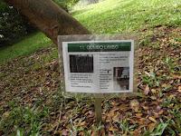 Gumbo limbo information - Ho'omaluhia Botanical Garden, Kaneohe, HI