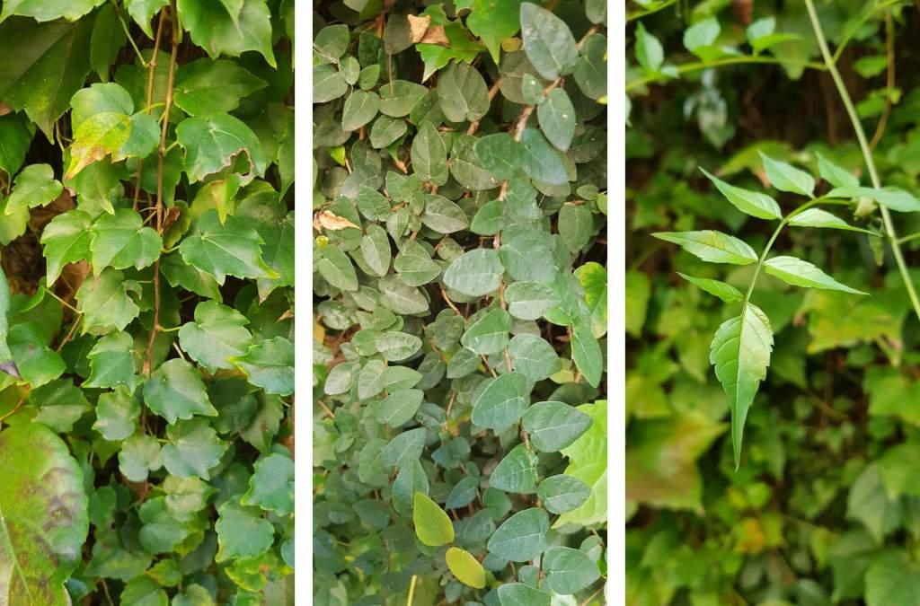Plantas para jardin vertical