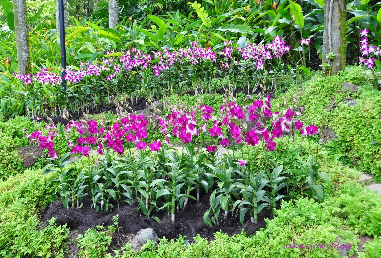 Ogród Botaniczny w Singapurze.