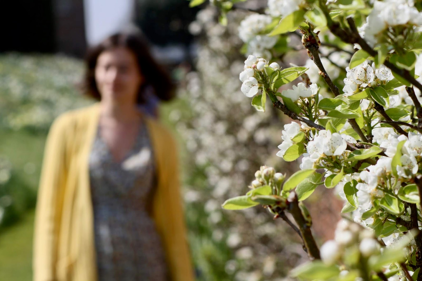 In the foreground, small white flowers and foliage, in the background Abbey stands just out of focus, wearing a dress and yellow cardigan