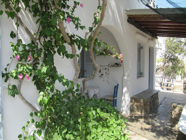 Bougainvillea and capers photographed together on Antiparos