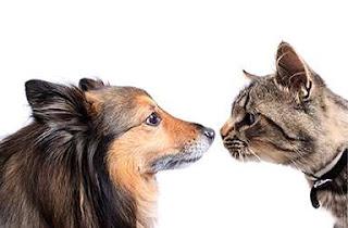 Cómo se comunican los animales, la asistencia proporcionada por una comunicación animal adecuada
