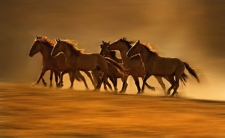 """White Wolf : U.S. Government Sells Wild Horses to """"Kill ..."""
