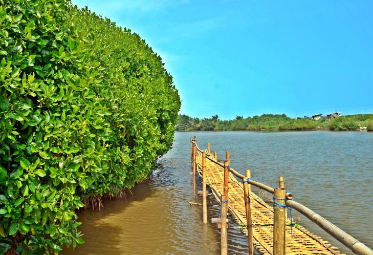 Daftar Pantai  di Kulon Progo Jogja yang Bagus dan Wajib