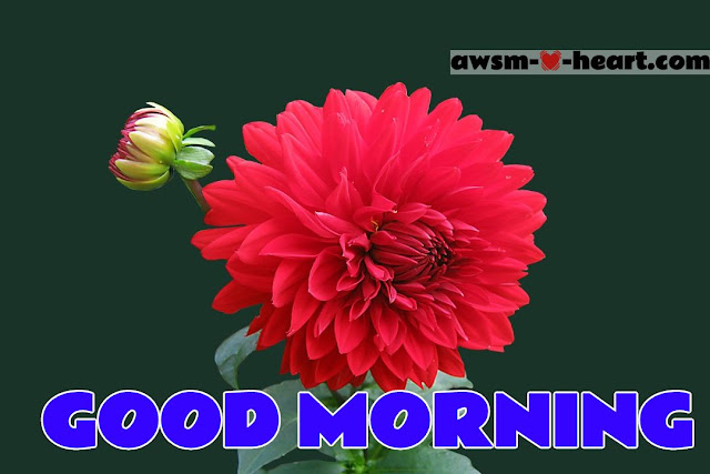 Good Morning  Flowers Pictures , Good Morning Images with Flowers HD