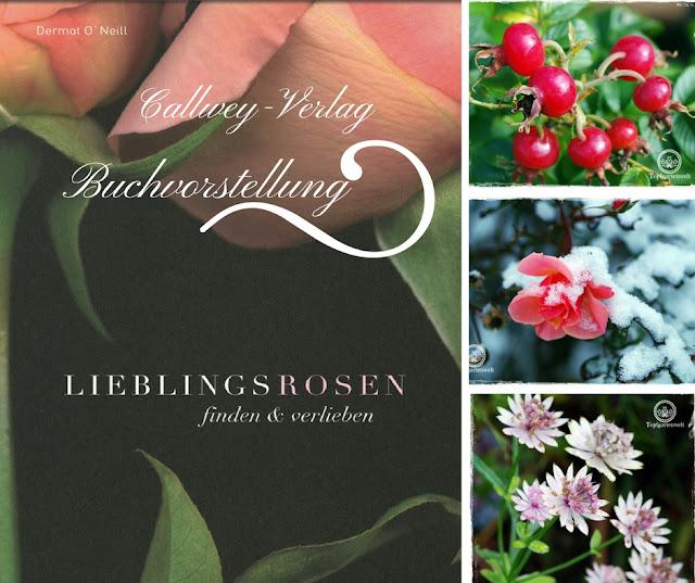 Buchvorstellung: Lieblingsrosen, finden und verlieben - die besten Rosen für den Garten im Portrait - Gartenblog Topfgartenwelt