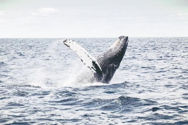 クジラのドル買い