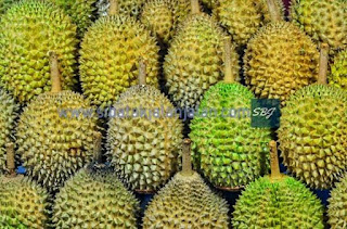 kumpulan buah durian