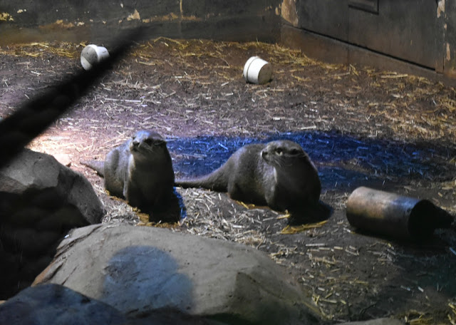 Otters - National Sea Life Centre Birmingham