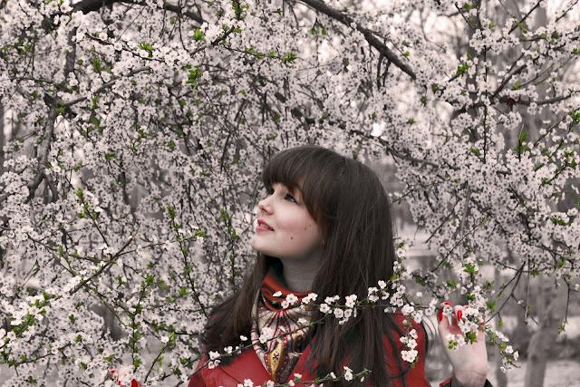 Gambar bunga sakura cantik