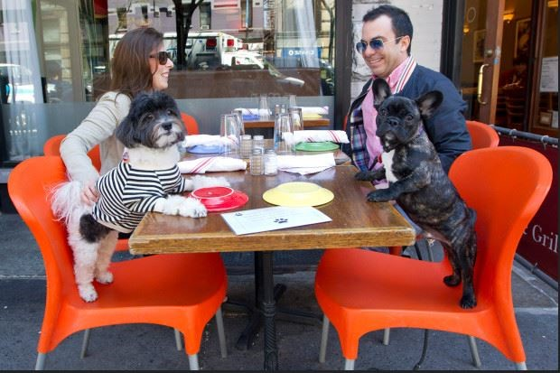 SOMETHING FOR THE WEEKEND: Lick my plate (dogs in restaurants), by Wiggia