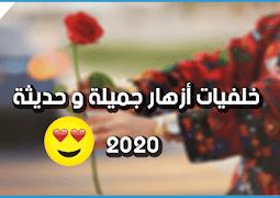 صور و خلفيات : خلفيات ورد و أزهار جميلة للبنات و الواتس اب كل أنواع الورود 2020 تنزيل صور مجانا