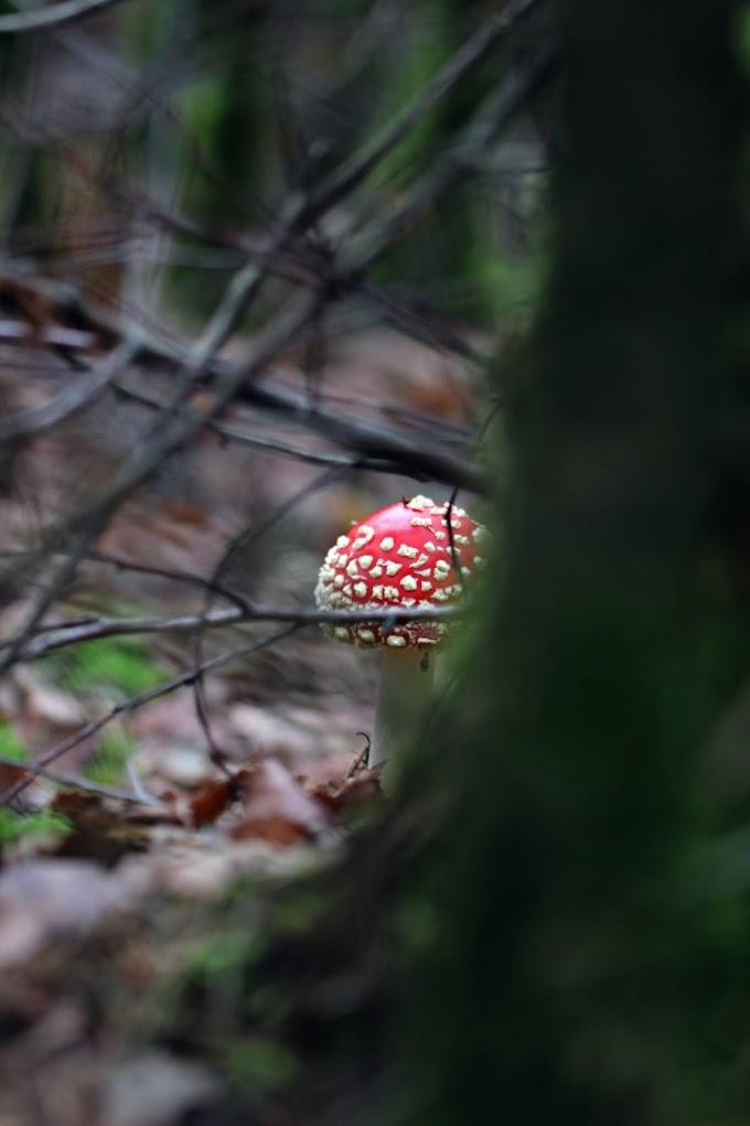 Fijne boswandeling: de leemkuilroute van 7 kilometer door het prachtige Amerongse bos