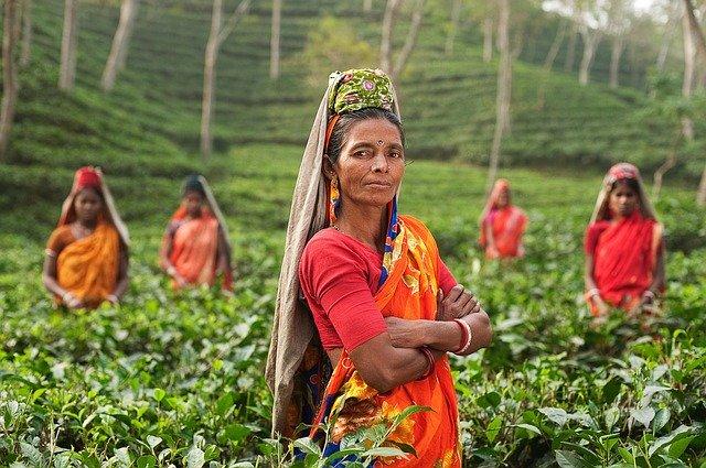 भारत की खेतों में काम करती महिलाएं