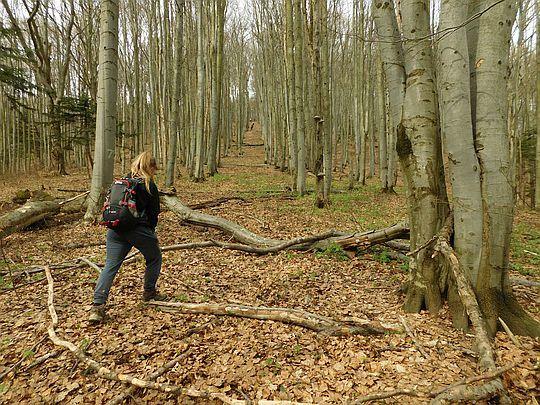 Korytarz leśny wiodący na szczyt Matragony.