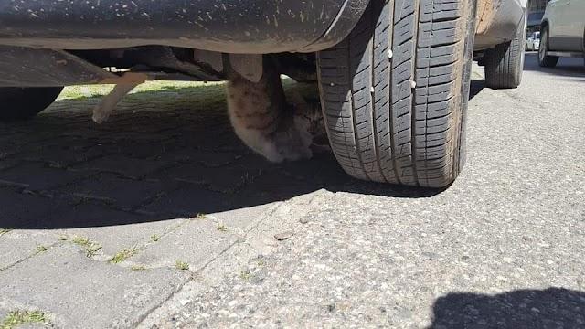 Şanlıurfa'da kedi operasyonu