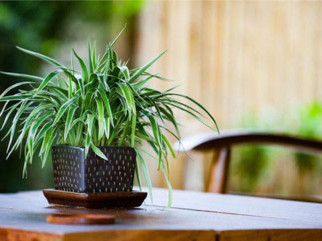 Indoor Plants In Glass Bottles