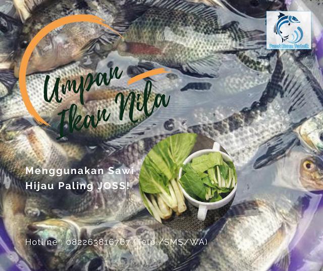 Mancing Ikan Nila Liar Menggunakan Sawi Hijau Paling Joss Kaskus