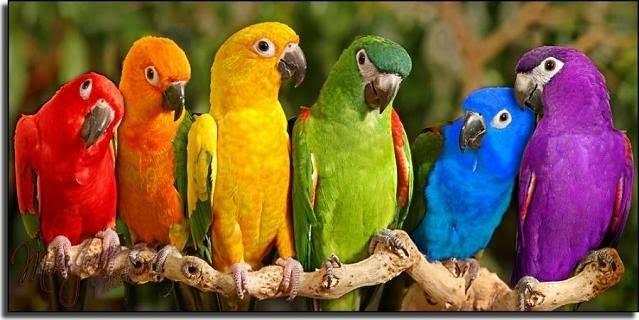 خصائص الطيور