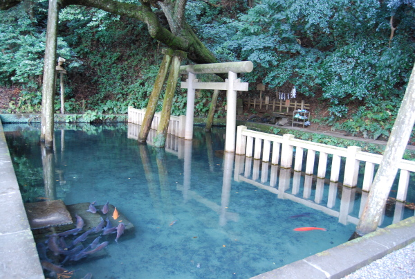 池の中に鳥居が浮かぶ風景?茨城県のパワースポット鹿島神社 御手洗池