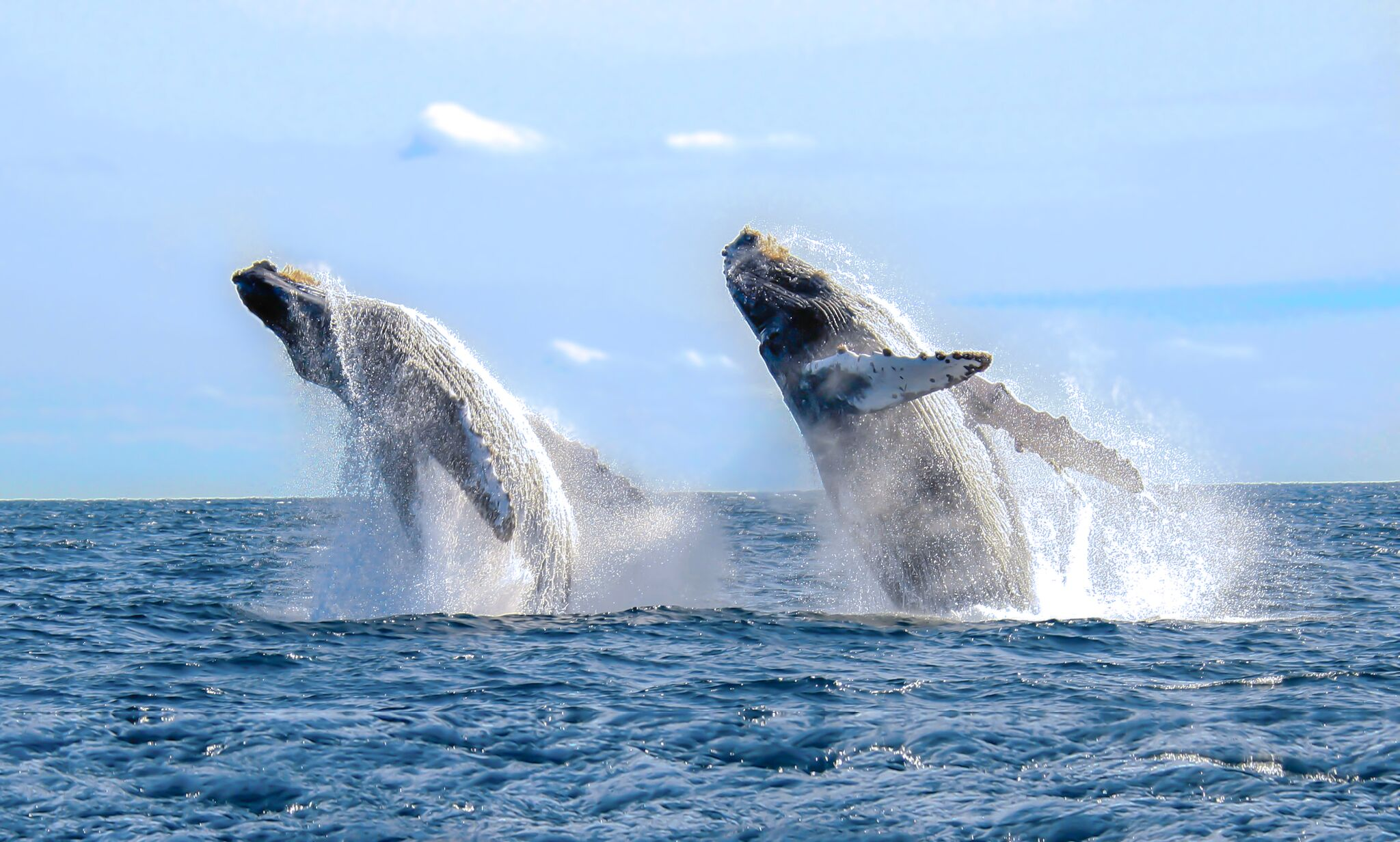 Whale Watching in nicaragua