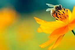 6 Tips Menghilangkan Alergi