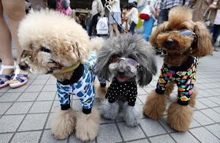 Fashion show de perros