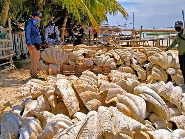 Κατασχέθηκαν γιγάντιες αχιβάδες στις Φιλιππίνες αξίας 25 εκατ. δολαρίων