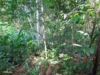 Pacific lowland rainforest, Costa Rica